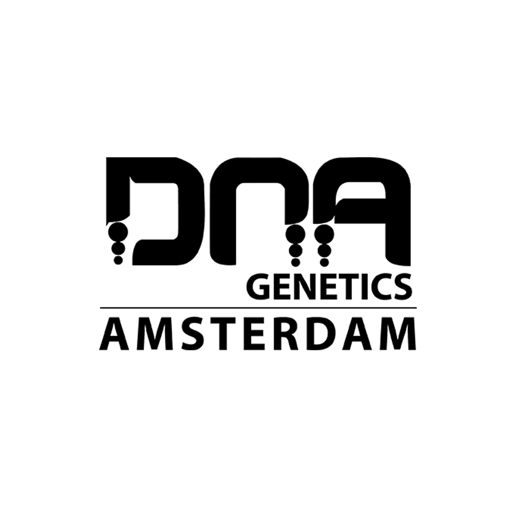 DNA Genetics Crocketts Haze regular 12ks