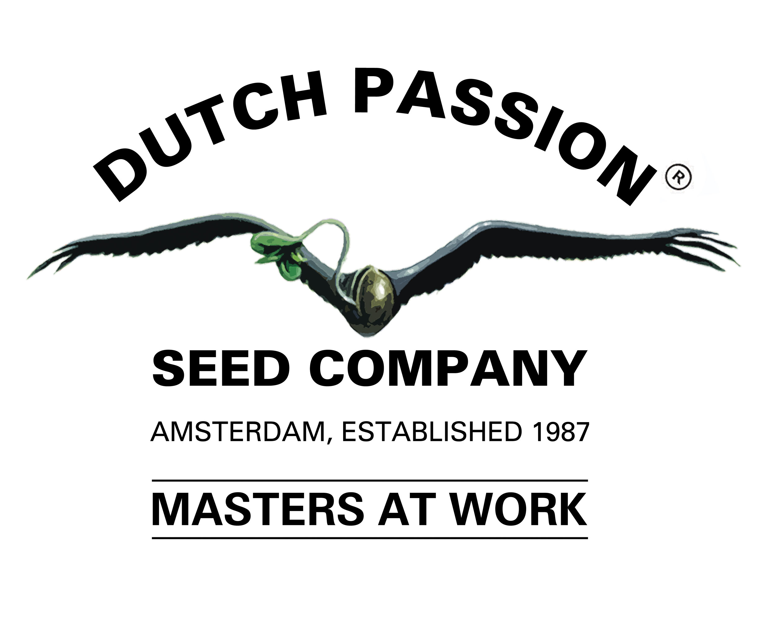 Dutch Passion Mokum's Tulip 5ks