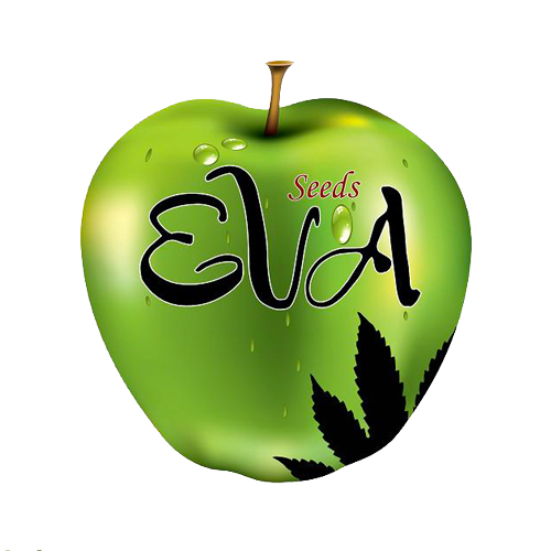 Eva seeds Excalibur 3ks