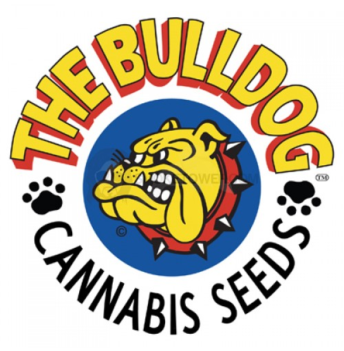 Bulldog Seeds Original Afghan regular 5ks